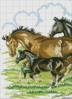 Gallery.ru / Фото #10 - лошади - zhivushaya