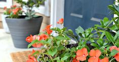 What's your favorite Minnetonka gardening trick?  Mine is the empty water bottles. Simple DIY Tricks for Covered Porch Plants