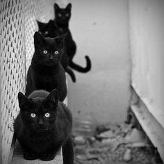 we're watching you
