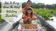 Tips To Bring Home The Most Nutritious Strawberry - What to look for when buying strawberries