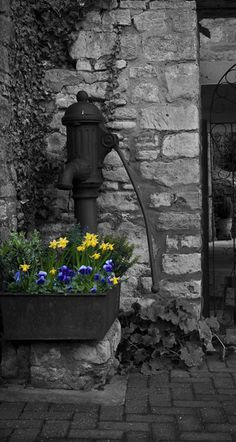 Black And White Photography With A Splash Of Color Flowers Water Pump