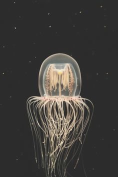 Some kind of deep-sea, seemingly bioluminescent jellyfish - would love to know more about it. Beautiful image.