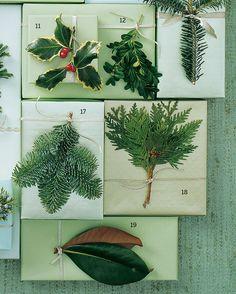 11. English Holly  12. Boxwood  17. Noble Fir  18. White Cedar 19. Magnolia  18. White Cedar   19. Magnolia