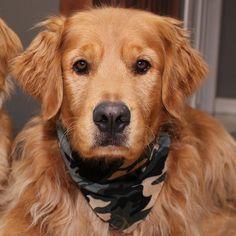 Can you see me?  #dailydog #dog_features #dogaccount #dogsofinstagram #dogsofinstaworld #insta_dog #ilovegolden_retrievers #gloriousgoldens #goldenretriever #goldens_ofinstagram #mydogiscutest #dogscorner #petsofinstagram #welovegoldens #animalpicturecom #lacyandpaws #retrieversgram #mygoldenfeatures #retrieversworld #inthepetspotlights #excellent_dogs #animaladdicts #topdogphoto #dogoftheday #dogs_of_world #weeklyfluff #seamusobrien #cutepetclub by goldenboyben