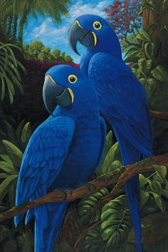 Blue Macaw Pictures =Macaw pictures to collect Cute Birds, Pretty Birds, Beautiful Birds, Animals Beautiful, Tropical Birds, Exotic Birds, Colorful Birds, Parrot Painting, Blue Macaw