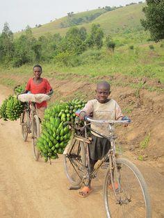 Taking Bananas to market, Uganda