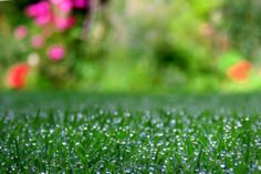Spring is an ideal time to grass up your #lawn/#garden, courtesy #spring rains.