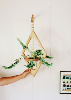 Jungalow hanging planters, designed by Justina Blakeney, Crafted by WeAreMFEO Terrariums, Indoor Garden, Indoor Plants, Indoor Outdoor, Orchid Planters, Green Life, Hanging Planters, Decoration, Plant Hanger