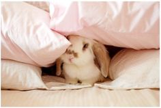 Discovered by Sake Princess. Find images and videos about cute, pink and kawaii on We Heart It - the app to get lost in what you love. Baby Bunnies, Cute Bunny, Bunny Rabbits, Bunny Bunny, Adorable Bunnies, Fluffy Bunny, Bunny Pics, Baby Pets, Funny Bunnies