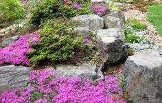 Flower Garden Rock Garden Design Tips Rocks Garden Landscape Ideas with Rocks Garden With Flowers Rock Garden Design, Rock Garden Plants, Flower Garden Design, Rocks Garden, Landscaping With Rocks, Backyard Landscaping, Garden Borders, Garden Planning, Garden Inspiration