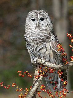 Owl's are my favorite!