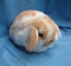 Fluffy Bunny ball!