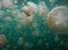 ジェリーフィッシュレイク「死ぬまでに泳ぎたい世界の驚愕スポット 12」トリップアドバイザー
