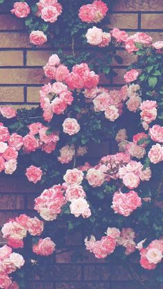 1080 × 1920 Background Pictures, Phone Backgrounds, Wallpaper Backgrounds, H… - Wallpaper ideas - - Iphone Wallpaper Pink, Phone Background Wallpaper, Flower Iphone Wallpaper, Rose Wallpaper, Trendy Wallpaper, Pretty Wallpapers, Flower Backgrounds, Iphone Backgrounds, Aesthetic Iphone Wallpaper
