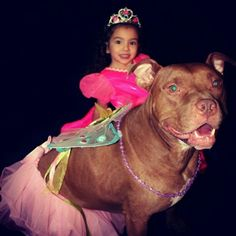 This dog that will accompany his fairy princess on backyard adventures.