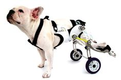 I love design that helps the less fortunate.  This little dog looks like he could launch an assault with his new robosuit.
