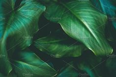 Large green tropical leaves by Rene Jordaan Photography on Photography For Sale, Creative Photography, Nature Photography, Landscaping Images, Business Illustration, Tropical Leaves, Watercolor Cards, Nature Photos, Plant Leaves