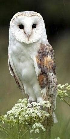 Owls are so mysterious
