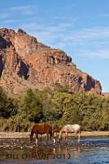 Wild Horses at Red Mountain
