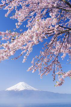 SAKURA Mt.Fuji by Hiroki Morita, via 500px. #桜 #CherryBlossom