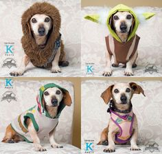 The charitable fan organization 501st Legion teams up with a dachshund rescue for a photoshoot featuring everyone's favorite 'Star Wars' characters.