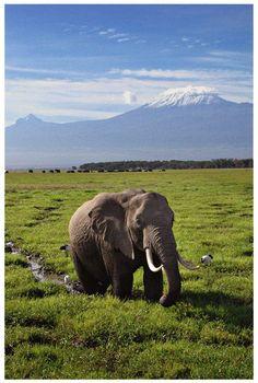 Mt. Kilimanjaro, Tanzania, Africa. >> Beautiful on so many levels! #JetsetterCurator
