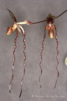 Lady Slipper-Orchid: Paphiopedilum Oberhousen Rubin 'Dark Specter' - Flickr - Photo Sharing!