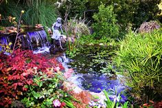 An Amazing Water Garden With Flowers Springtime Growth And A Waterfall