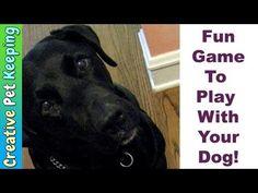 11 tricks you can teach a senior dog | MNN - Mother Nature Network