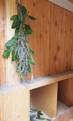 Aromatherapy for Chickens - DIY Herb Bouquet for the Coop & Nest Box Herbs