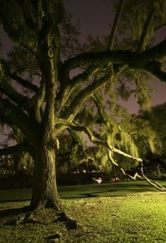 Under the Old Oak Tree in City Park ~ New Orleans, Louisiana