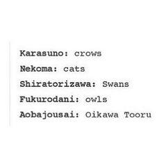 Shiratorizawa is eagle... Or so i thought
