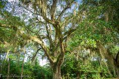 Photo Friday - 10 on 10 - See Mississippi - Logtown - Pierced Wonderings - http://www.piercedwonderings.com