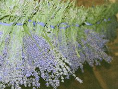 Herbs thrive on neglect once established. Care for young lavender as you would any new perennial. When well rooted, lavender is tolerant of heat and dry spells. Water if there is a drought. Over watering leads to root rot which will cause lavender to die.  Prevent weeds by mulching with a light colored mulch like coarse sand, gravel or oyster shells.  Prune 1/3 of lavender plant each fall, 2-3 weeks before hard frost. Pruning will help the plant grow full and rounded