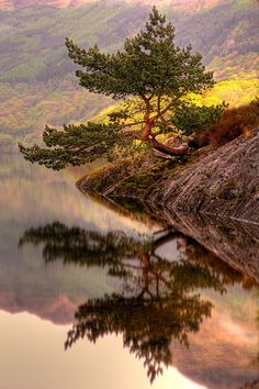 Lone Pine Tree, Loch Lomond, Scotland  Wow, what an amazing picture.  Peace,   harmony and balance...<3