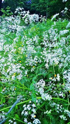Aulanko, rantareitti, Tekosaari Nature Reserve, Hotel Spa, Finland, Herbs, Statue, Park, Plants, Pictures, Collection