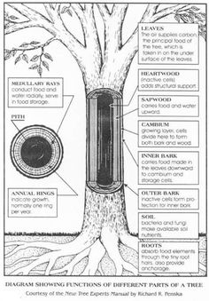 Science - Parts of a Tree