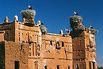 Storchennester auf Kasbah in Marokko Ciconia ciconia