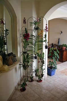 like this way of displaying orchids