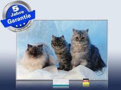Katzen würden eine Infrarotheizung kaufen; denn die Wärmestrahlung lädt zum Verweilen ein: Infrarot Bildheizung 500 Watt