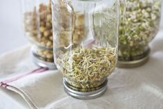 Grow your own microgreens & sprouts. A good rainy day project! microgreensprouts-7096