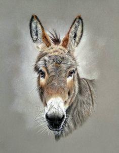 Animal Paintings, Animal Drawings, Art Drawings, Portraits Pastel, Pet Portraits, Barnyard Animals, Cute Animals, Donkey Drawing, Cute Donkey