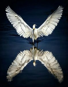 Witte reiger wordt gespiegeld in het water