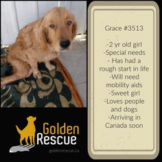 How To Be Graceful, Mobility Aids, Special Girl, Love People, Volunteers, Sweet Girls, Cairo, Adoption, Website