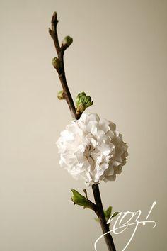 paper flowers  noz!design