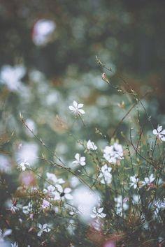 Весна хрупкость