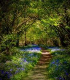 Not sure where this was taken but very much reminds me of the lovely walk from Wensley Bridge to West Burton in Wensleydale.