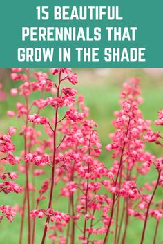 Just because an area of garden is in shade, doesn't mean it has to be boring. Here are 15 beautiful perennials to add beauty and color to your shady spots. art design landspacing to plant Shade Tolerant Plants, Shade Garden Plants, Shaded Garden, Flowers Perennials, Planting Flowers, Part Shade Perennials, Organic Gardening, Gardening Tips, Indoor Gardening