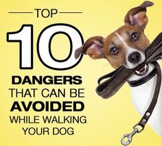 Dangers of dog leash
