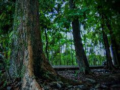 -Hutan di tengah kota-  @fawwazammar87  #forest #hutan #nature #alam #greens #greenlife #gogreen #green #trees #tree #flora #indonesia #landscape
